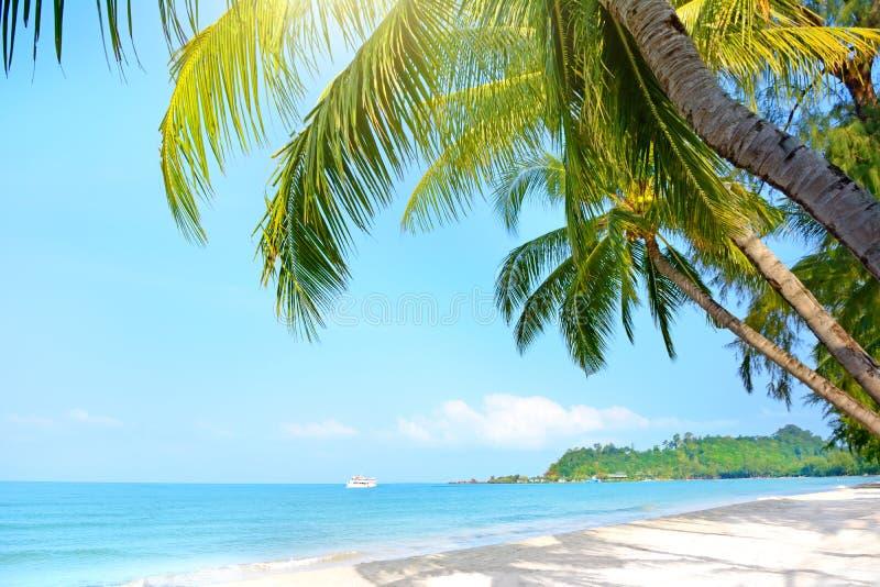 Beach with palm trees. Klong Prao Beach stock photo