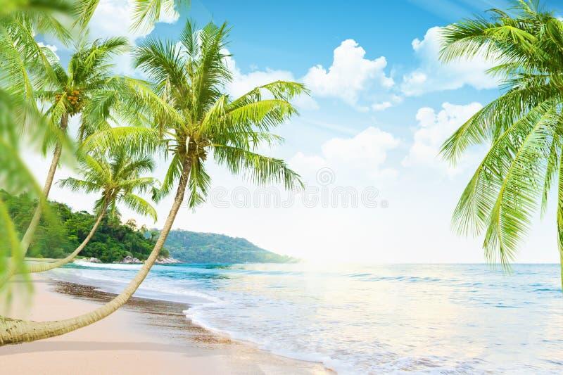 Beach with palm trees stock photos