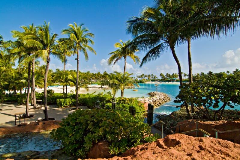 Download Beach At Paradise Island, Bahamas Stock Photo - Image: 12239332