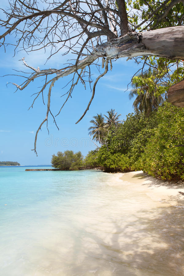 Download Beach in paradise stock photo. Image of coconut, ocean - 42194452