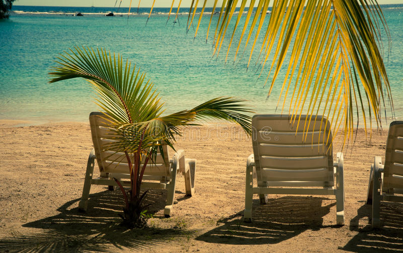 Download Beach paradize stock photo. Image of leaf, chairs, relax - 23259646
