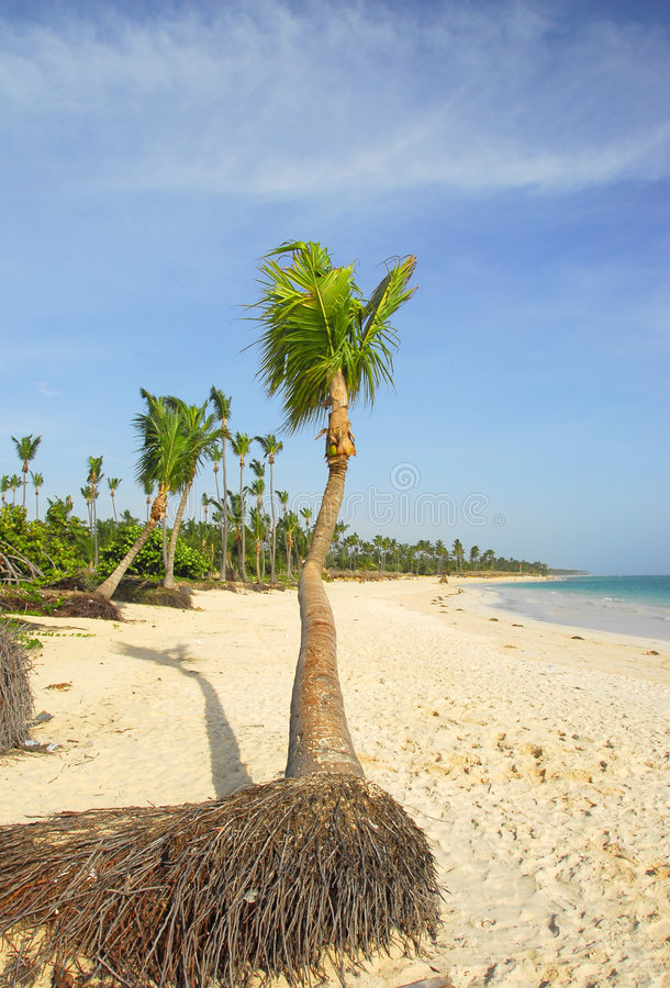 beach paradiziacas fotografia royalty free