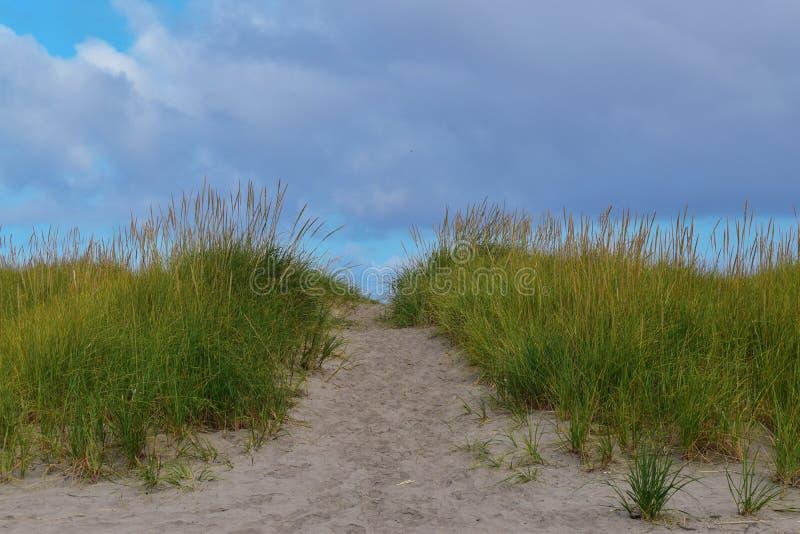 Beach Path med gräs royaltyfria foton