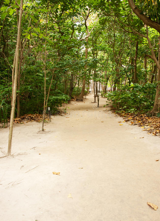 Beach Pathway Through Tropical Forest Stock Photos