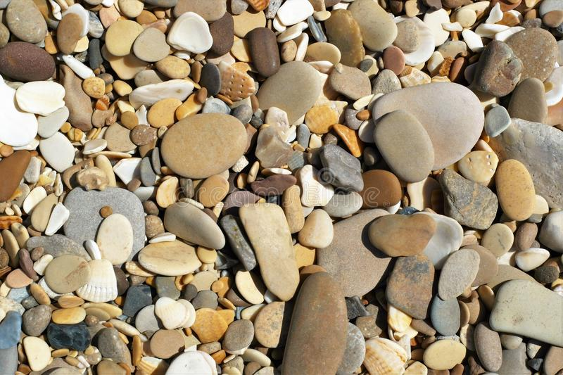 Beach pebbles and seashells stock photos