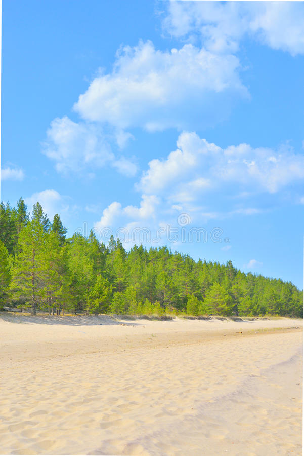 Beach and pine forest at morning. royalty free stock photography