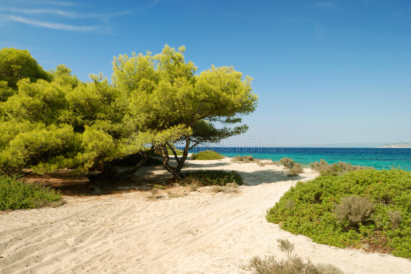 Download Beach with pines and bush stock image. Image of mountain - 17759495