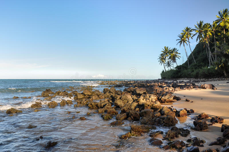 Beach of Pipa, Natal (Brazil). Beach of Pipa, with cliffs and palms in background, Natal (Brazil stock photography