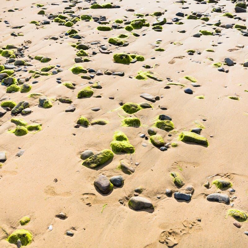 Beach Plage de la Baie de Launay during low tide. Travel to France - surface of beach Plage de la Baie de Launay on bay Anse de Launay of English Channel in stock images