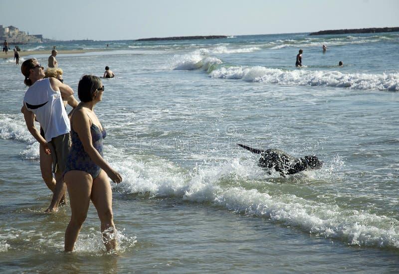 Beach play fun time in Tel Aviv, Beach stock photo