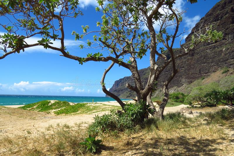 Beach at Polihale State Park, Kauai, Hawaii. The secluded Polihale State Park consists of a deep blue ocean, a white beach with green covered sand dunes, a royalty free stock photo
