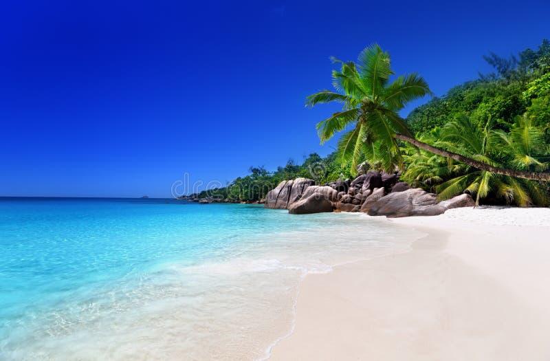 Beach at Praslin island stock photography