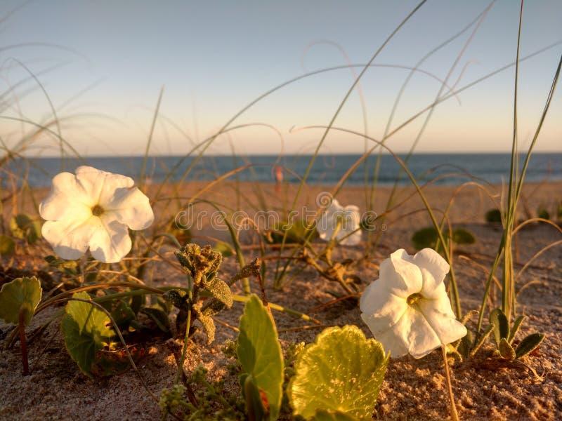 Beach& x27; s bloemen royalty-vrije stock foto