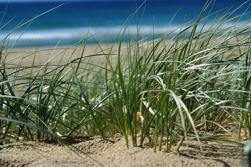 Download Beach Sand Dunes stock image. Image of green, peace, details - 23640021