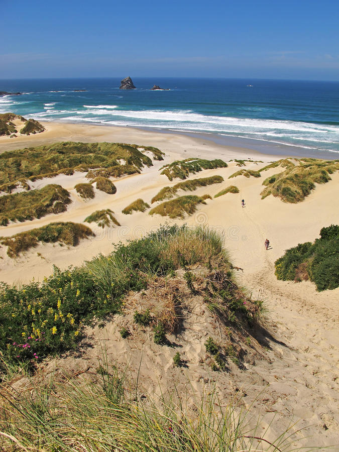 Beach and sand dunes royalty free stock images