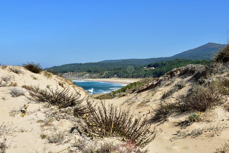 Wild beach with sand dunes and big waves with foam. Blue and turquoise water, forest and vegetation. Galicia, Spain. Sunny day. royalty free stock photos