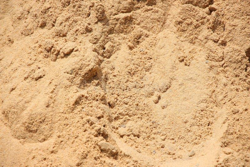 Beach sand grain. Close up view of beach sand grain royalty free stock photos