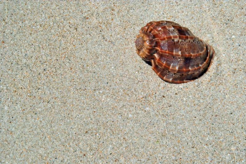 Download Beach sand, sea shell. stock photo. Image of nature, hawaii - 5324794
