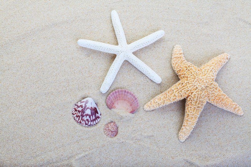 Beach sand. Starfish and shells on the beach sand background
