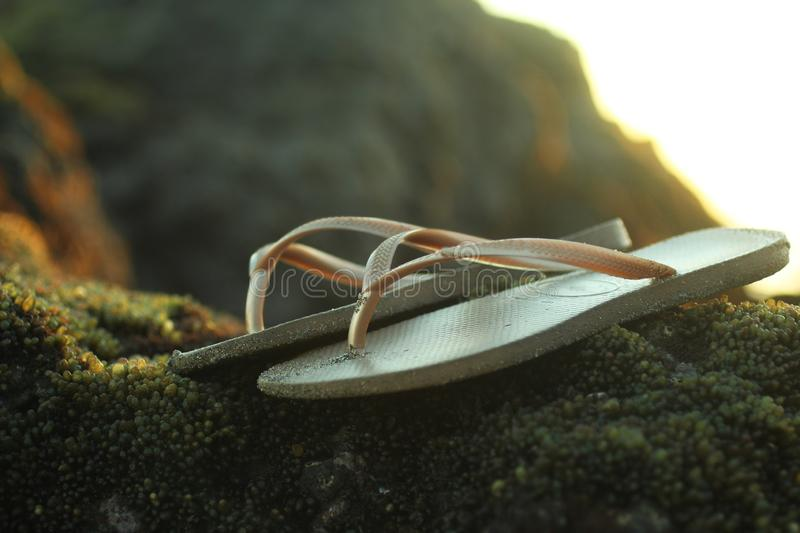 Brown sandals on sea rock with seaweed growth background. stock photos