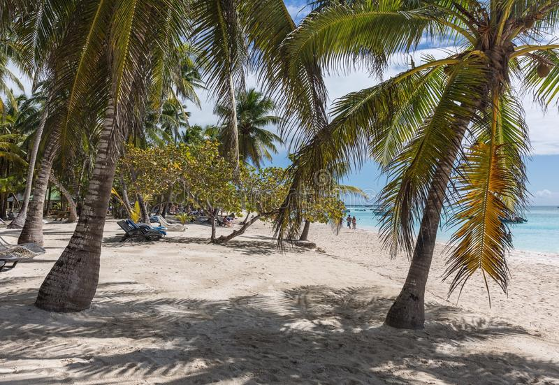 Saona island. At the beach on the Saona island in Dominican Republic royalty free stock images