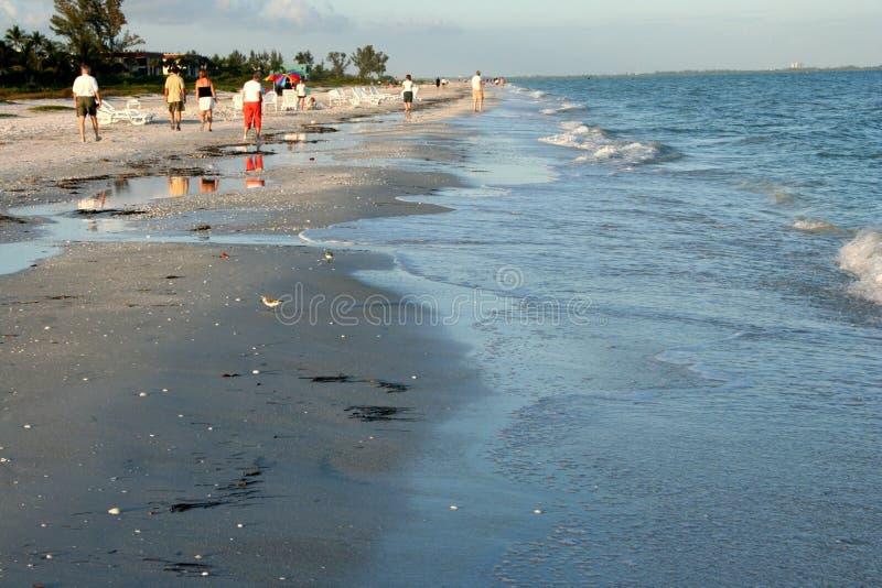 Beach Scavengers stock photos