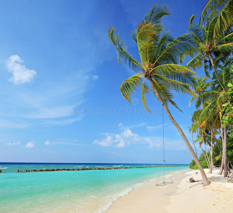 Palm Tree Beach: Beach Scene With A Swing On A Palm Tree Stock Image