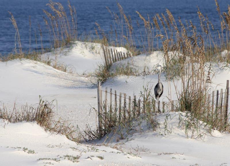 Beach Scenery stock photography