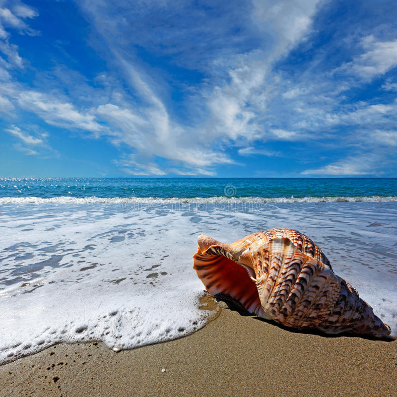 Beach with shell. Beach with conch shell under blue sky stock image