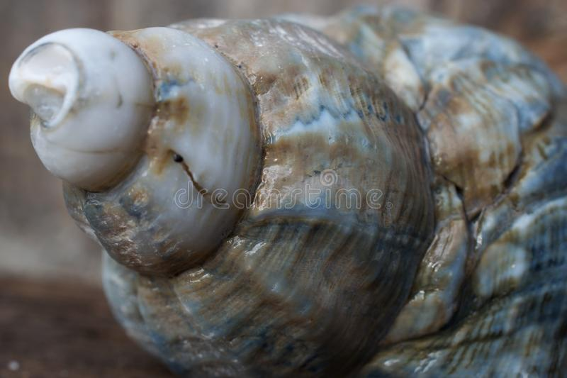 Beach Shell Close-up stock photos
