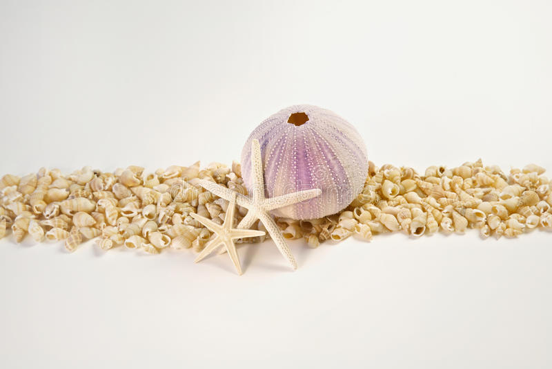 Beach shells and starfish border. Beach shells and starfish isolated on white royalty free stock photo
