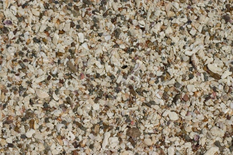 Beach Shells Texture Stock Photo