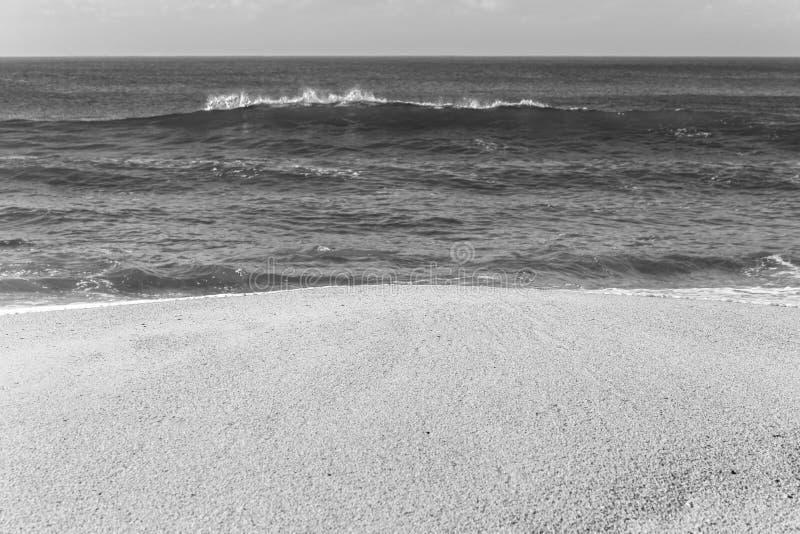 Black And White Shoreline Stock Photo Image Of Shells