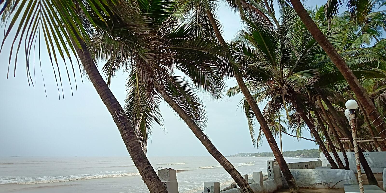 Beach side coconut trees stock photo