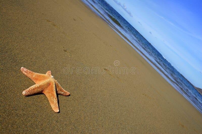 Beach with Starfish stock image