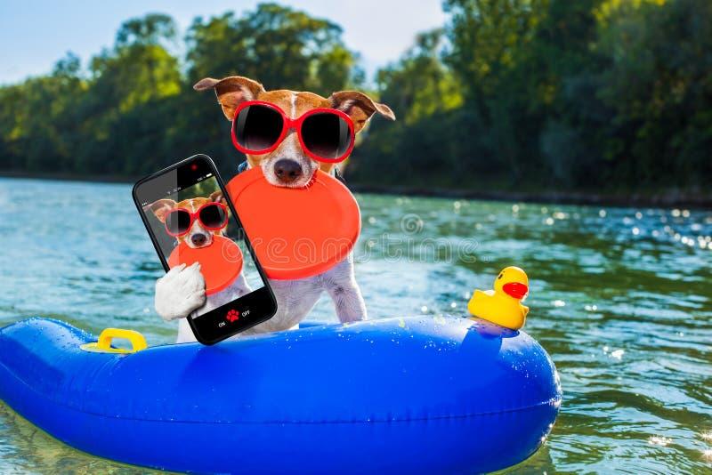 Beach summer dog selfie royalty free stock image
