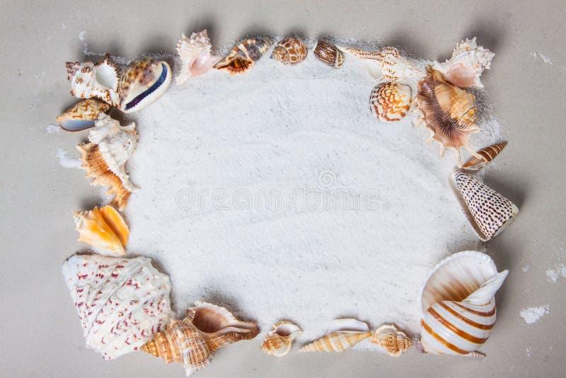 Beach, summer, sea shells. Beautiful summer background texture royalty free stock photography