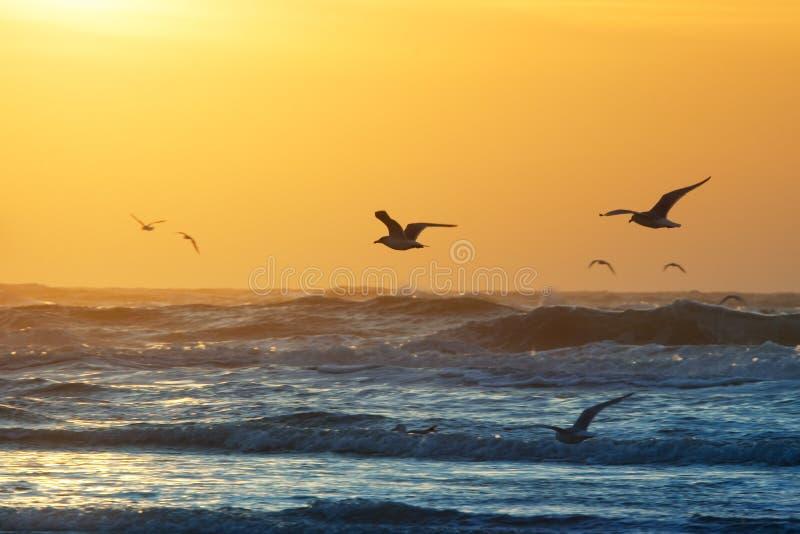 Beach and sunset. Birds and sunset on the beach