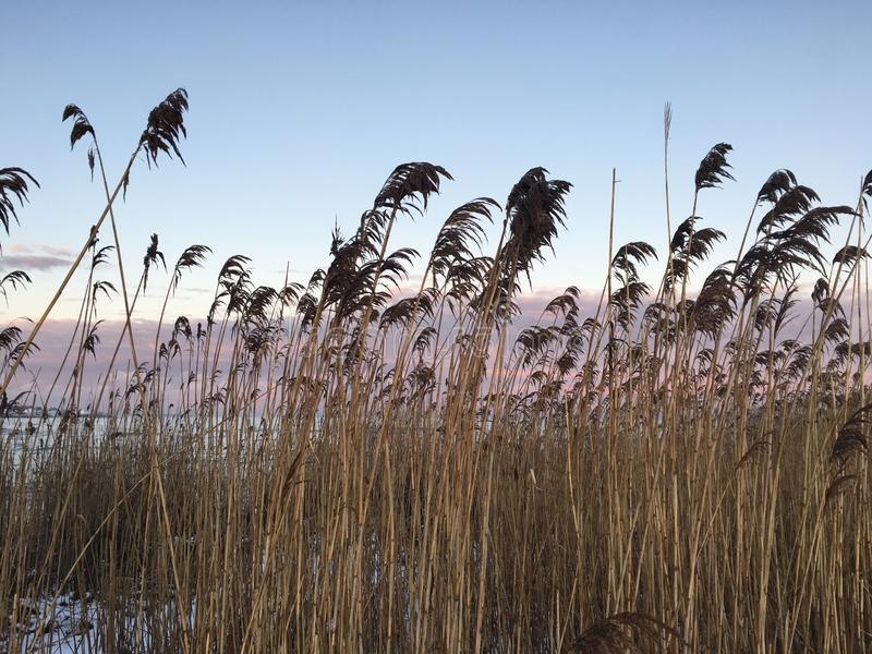 Beach sunset cat tails royalty free stock images