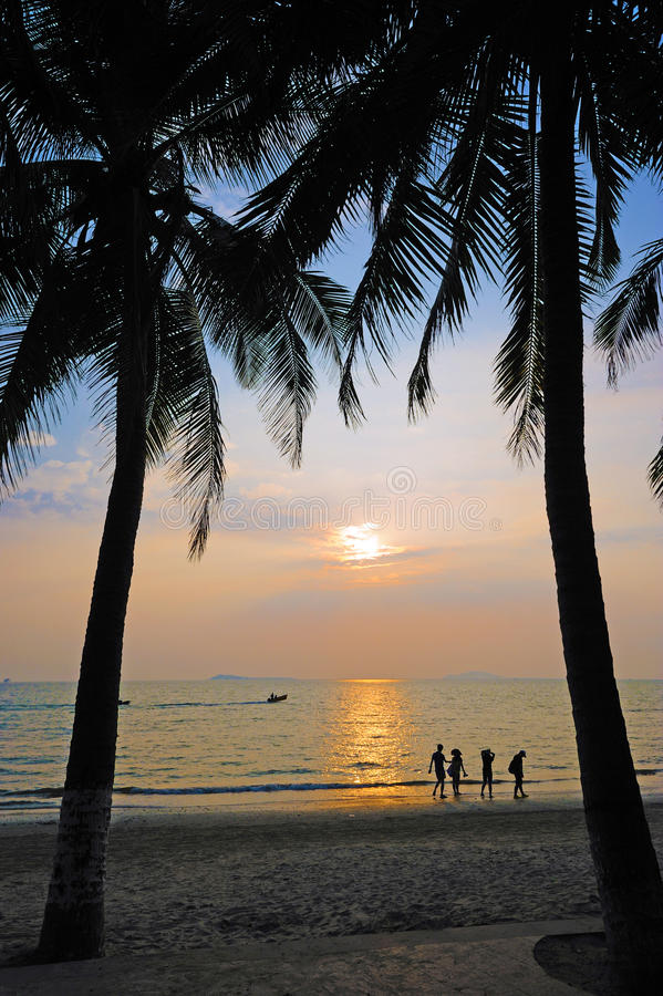 Download Beach At Sunset With Palm Trees Stock Image - Image: 22065451