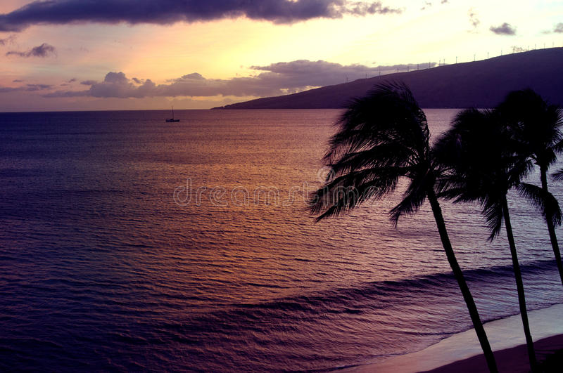 Beach sunset with palms silhoettes stock image