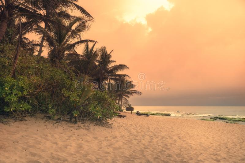 Beach sunset travel vacation lifestyle landscape with palm trees wide sand coastline waves with scenic orange sunset sky in Sri La stock photos