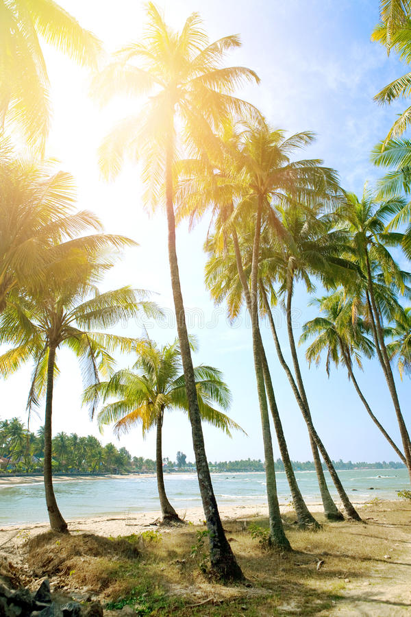 Beach with tall coconut trees against blue sky off west coast of Myanmar royalty free stock image