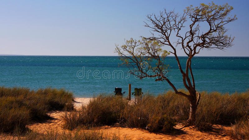 Beach With Tree Stock Photos