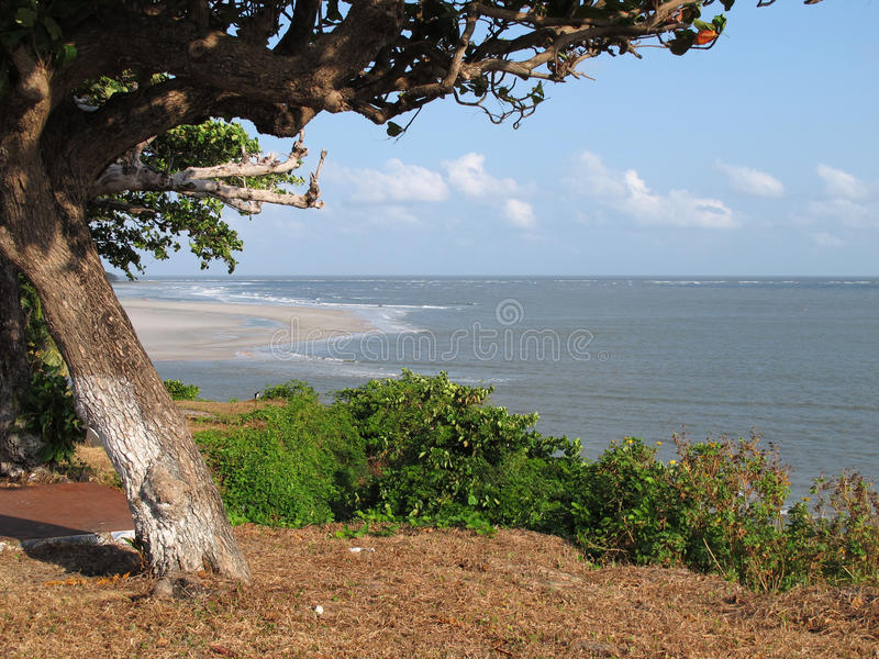 Download Beach tree stock image. Image of summer, nature, oceanic - 16568327