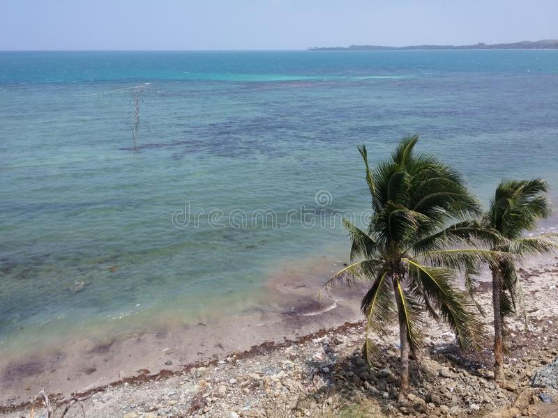 Beach Tree stock images