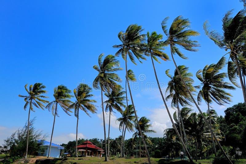 Beach-Tropical beach