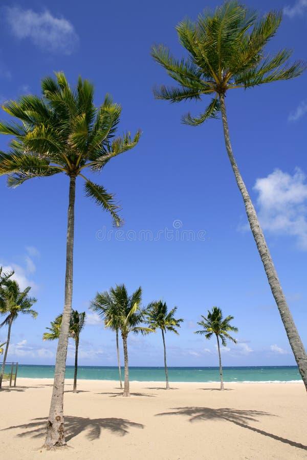 Beach in tropical Florida sunny day stock photo