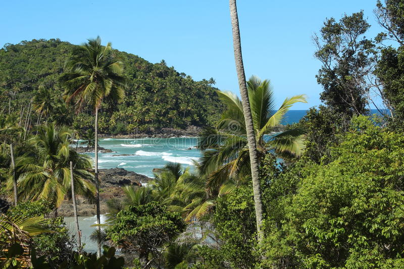 Beach and tropical forest stock photography