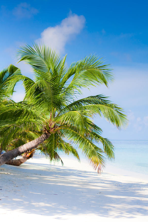 Download Beach on tropical island stock image. Image of clean - 28592039